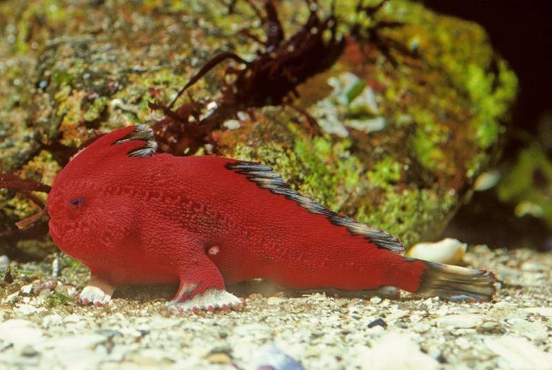 صور أغرب الأسماك التي تسير في قاع البحر #غرد_بصورة -صورة 2