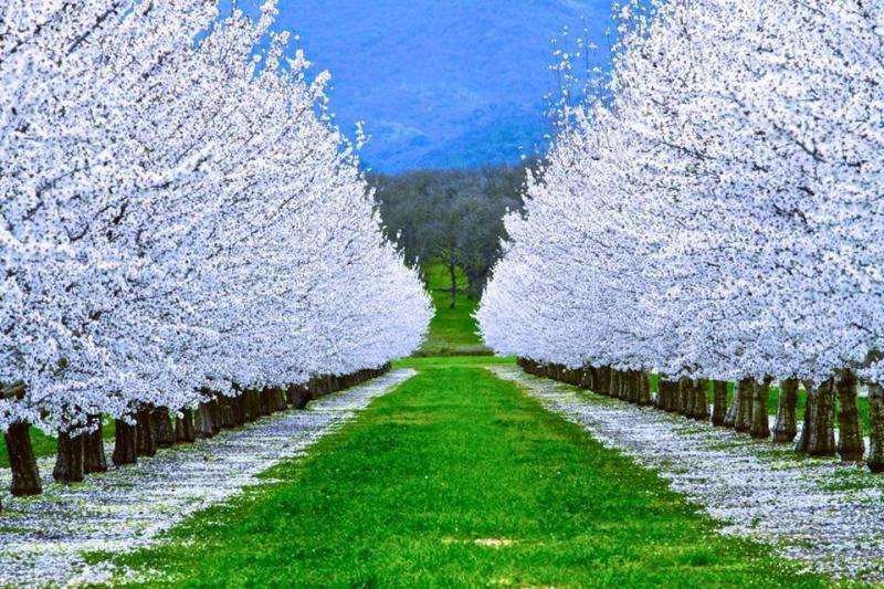 صور من جمال وسحر الطبيعة