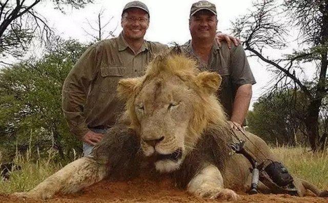 الطبيب والتر بالمر وشريكه الذين قتلا الأسد Cecil مما اثار حملة عالمية ضدهما - صورة ١