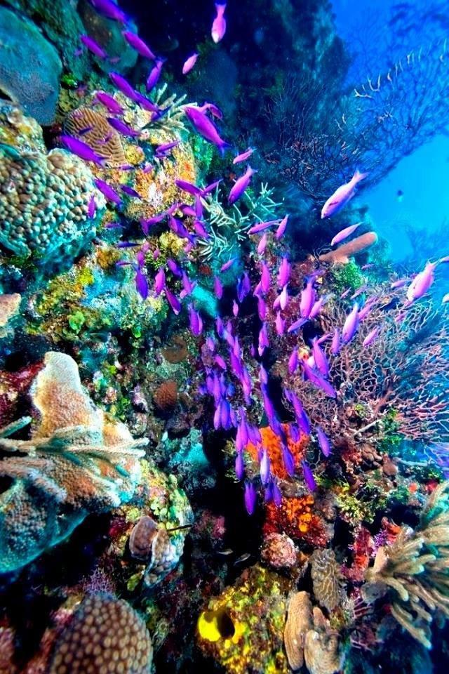 شاهد روعة الالوان تحت سطح الماء صوره 1