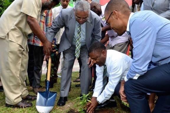 وزير العدل بدولة جمايكا يقوم بزراعة أول نبتة مُخدرات شرعيه، بعد فرض قوانين بتشريع زراعتها
