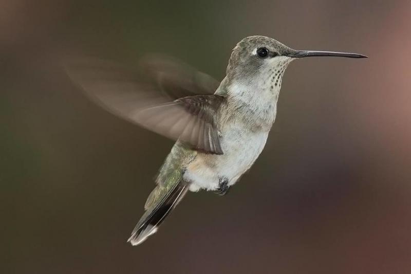 صور طائر #الطنان الذي يعد من اصغر الطيور #غرد_بصوره 6