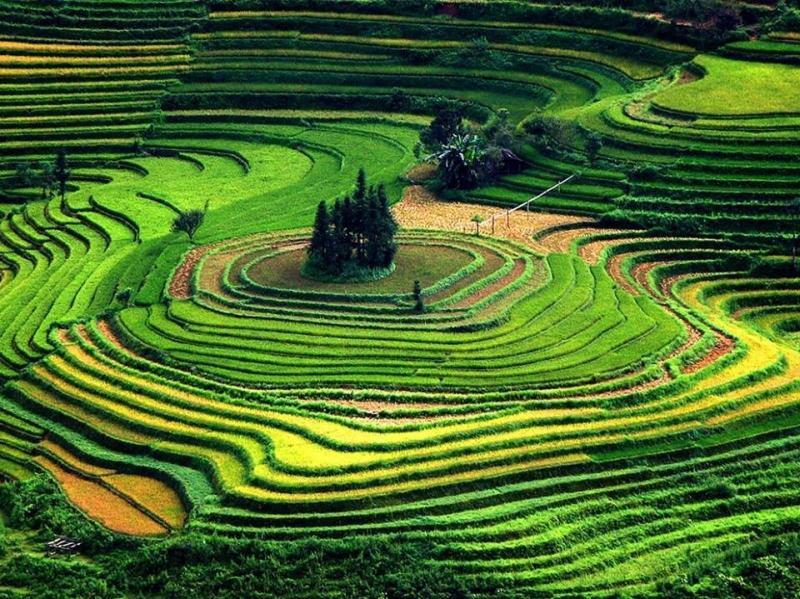 جمال وروعة حقول الأرز في #فيتنام صوره 3