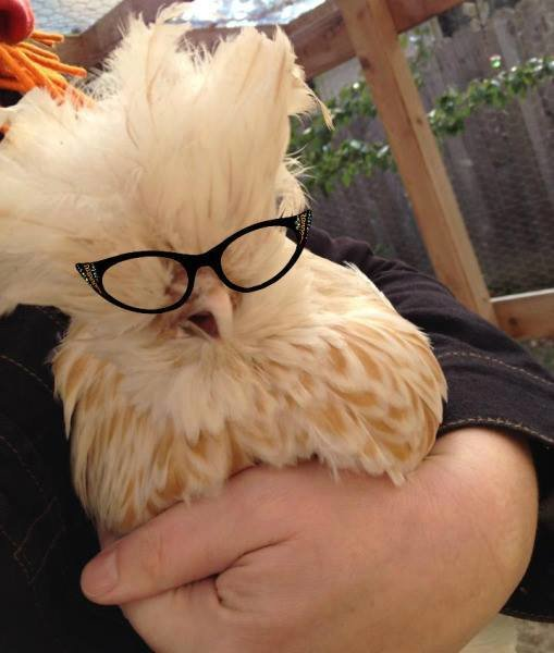 حيوانات ترتدى نظارة- #غرد_يصورة -6