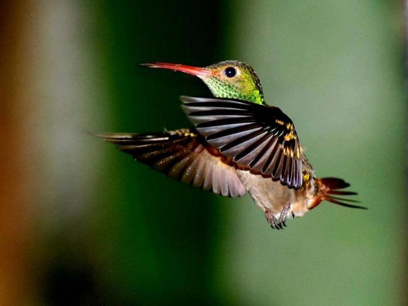 صور طائر #الطنان الذي يعد من اصغر الطيور #غرد_بصوره 4