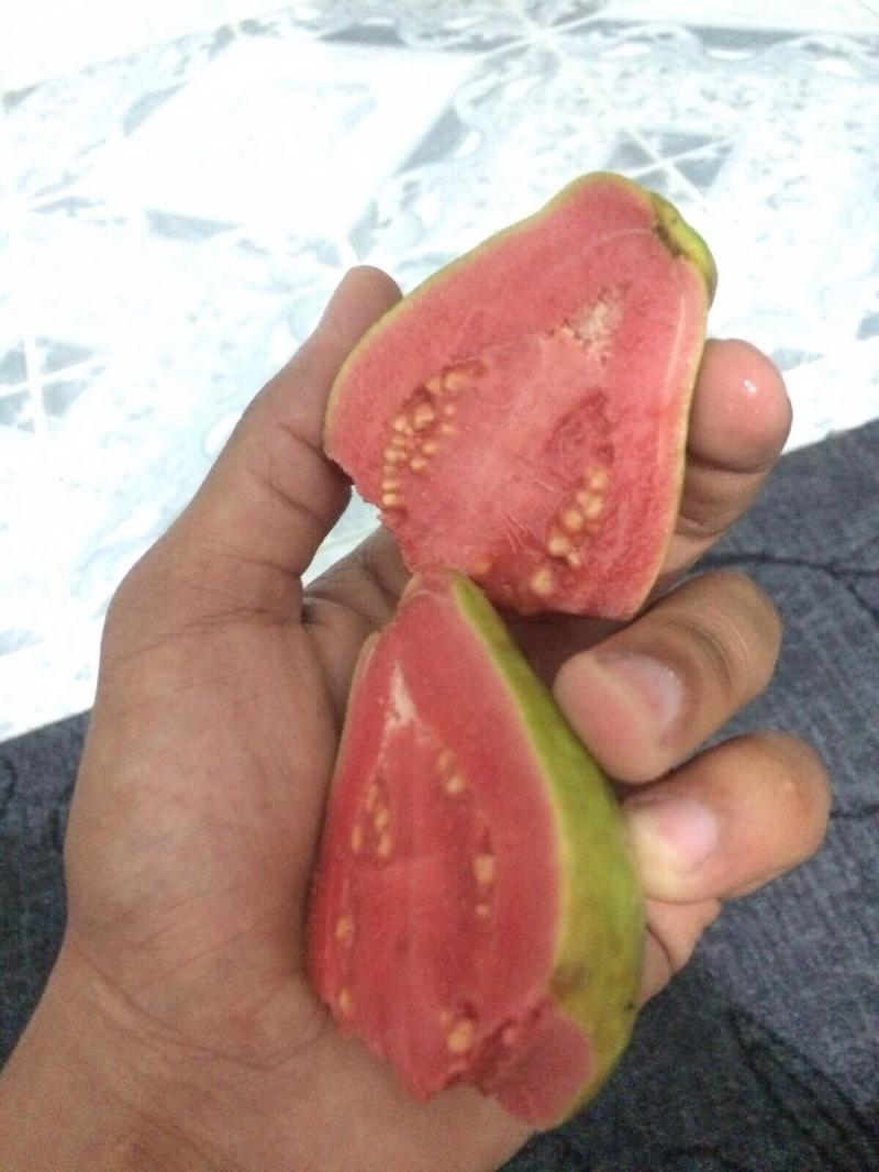 جوافة بطعم الفراولة من انتاج #الأردن
