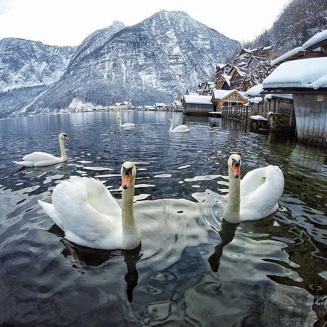 صور رائعة من #النمسا صوره 3