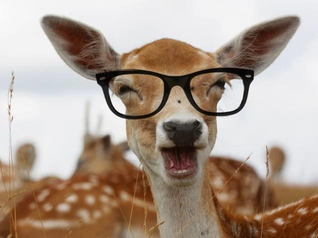 حيوانات ترتدى نظارة- #غرد_يصورة -7