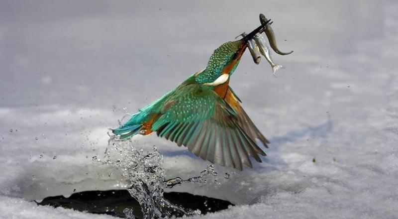 عندما تصطاد الطيور الاسماك #غرد_بصوره صوره 6