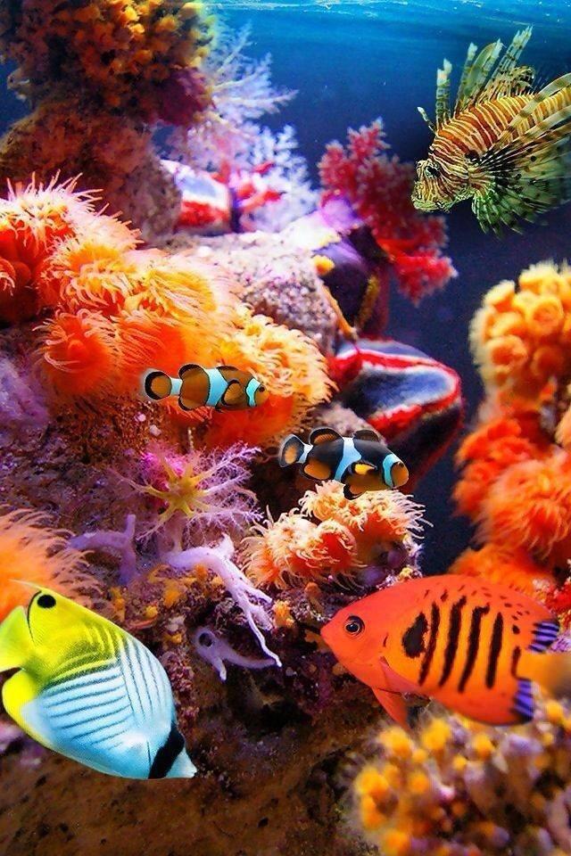 شاهد روعة الالوان تحت سطح الماء صوره 2