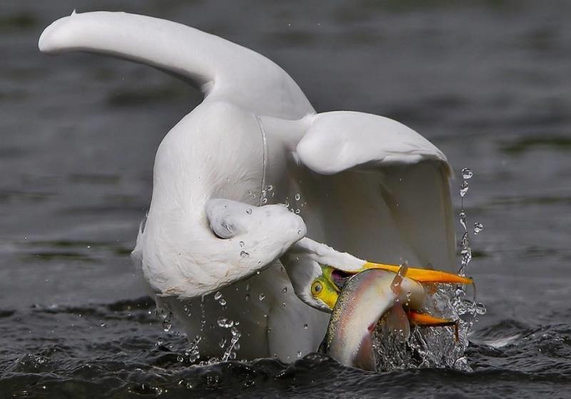 عندما تصطاد الطيور الاسماك #غرد_بصوره صوره 1