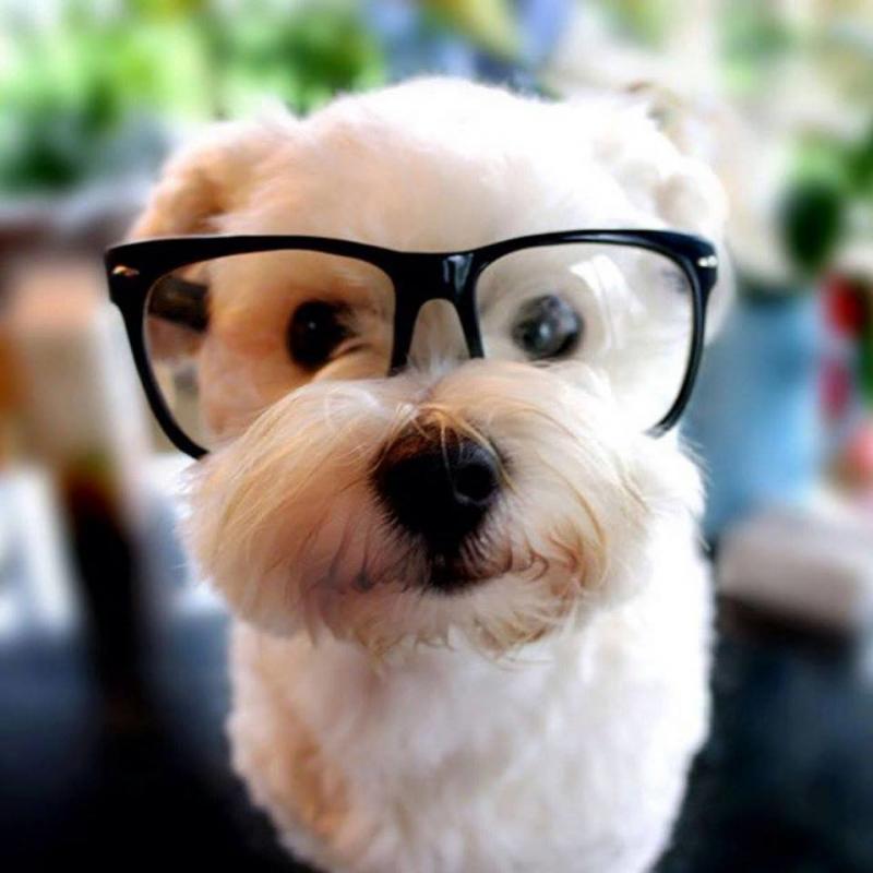 حيوانات ترتدى نظارة- #غرد_يصورة -3