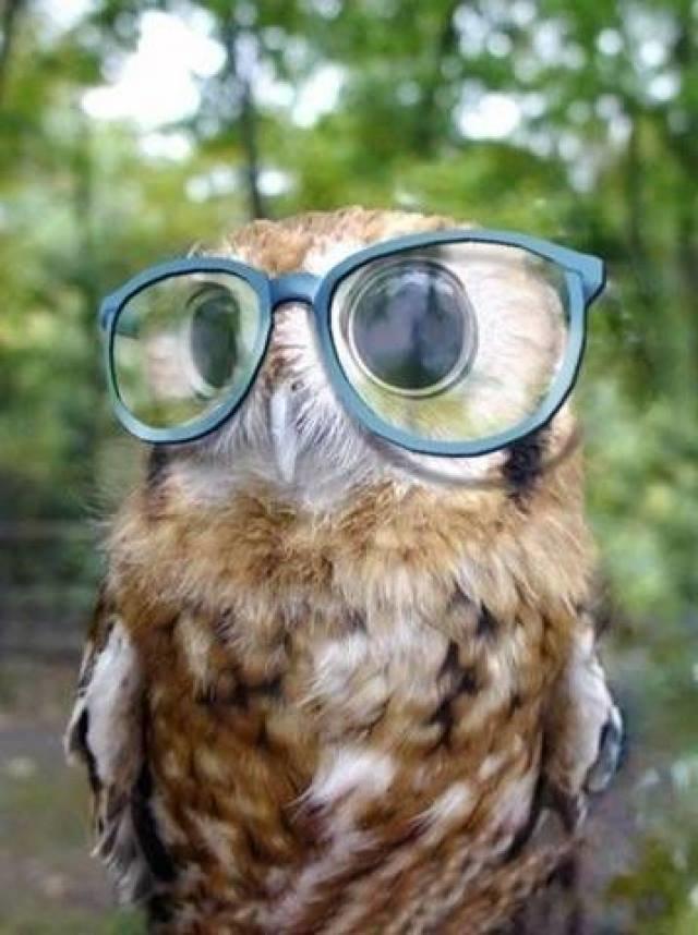 حيوانات ترتدى نظارة- #غرد_يصورة -1
