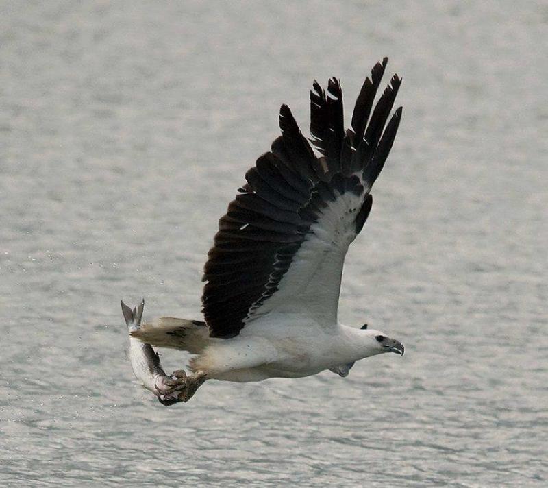 عندما تصطاد الطيور الاسماك #غرد_بصوره صوره 3