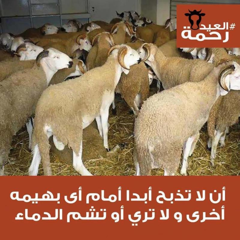 تعاليم الرسول صلى الله عليه وسلم في آداب الذبح في #عيد_الاضحى #العيد_رحمة -3