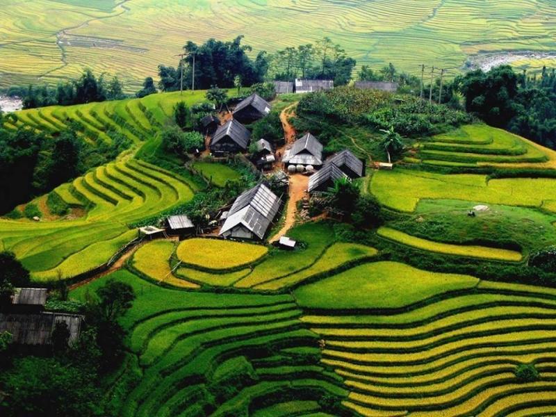 جمال وروعة حقول الأرز في #فيتنام صوره 5