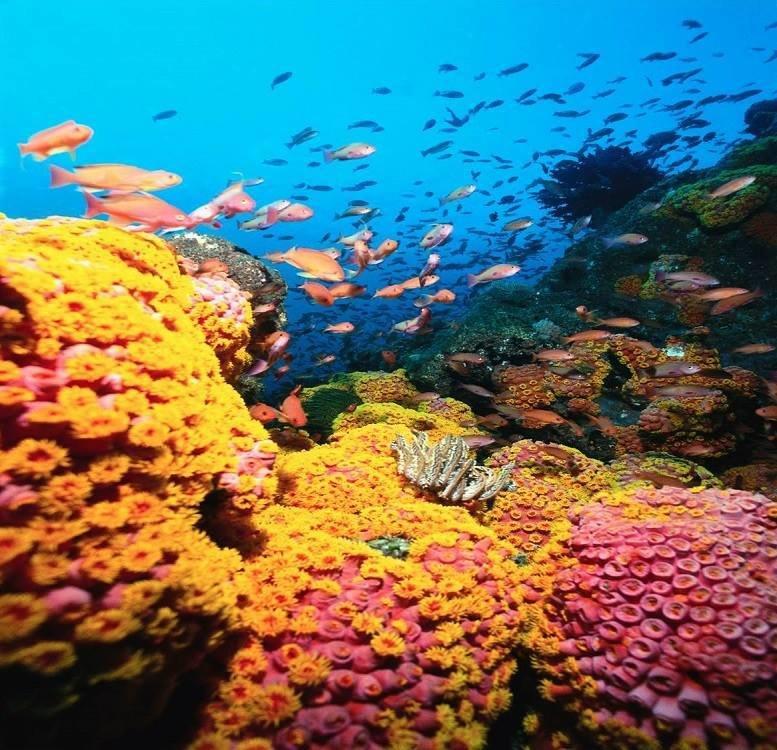 شاهد روعة الالوان تحت سطح الماء صوره 3