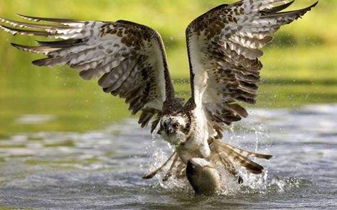 عندما تصطاد الطيور الاسماك #غرد_بصوره صوره 5