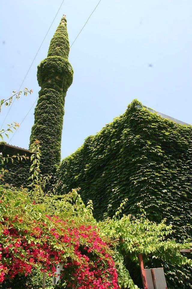 #الجامع_الأخضر مسجد تغطيه النباتات في #أضنة #تركيا صوره 5