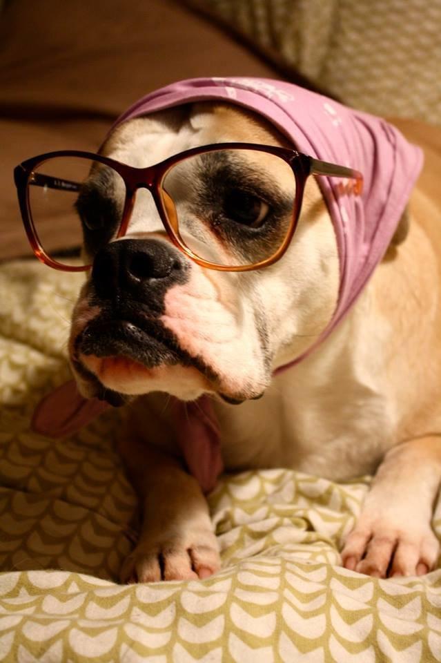 حيوانات ترتدى نظارة- #غرد_يصورة -2