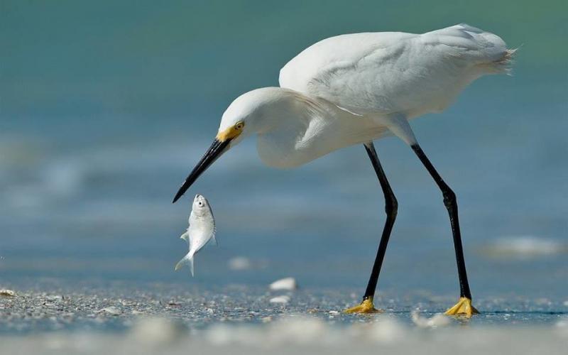 عندما تصطاد الطيور الاسماك #غرد_بصوره صوره 8