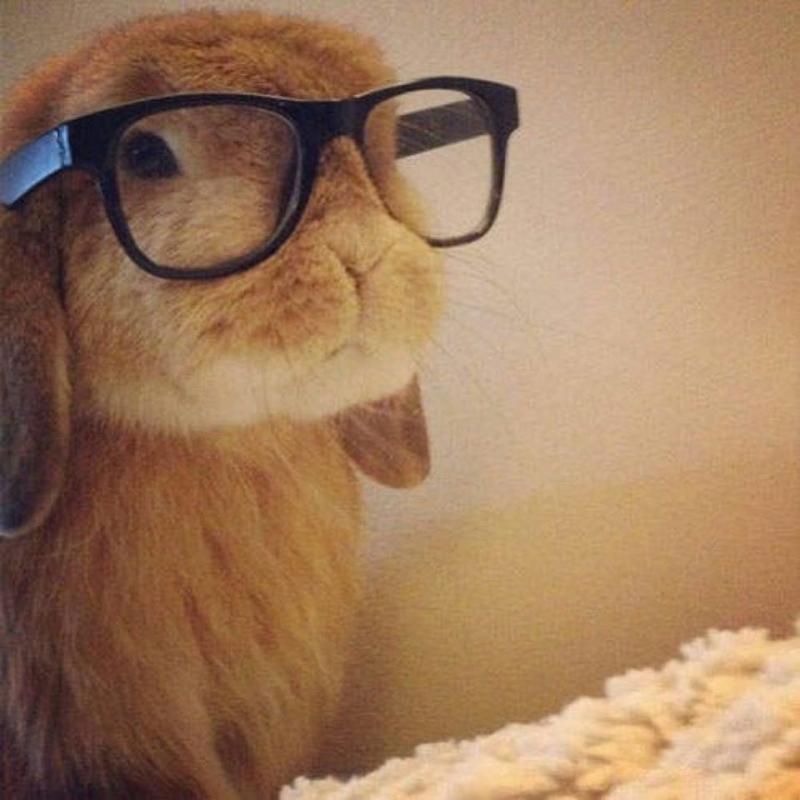 حيوانات ترتدى نظارة- #غرد_يصورة -4