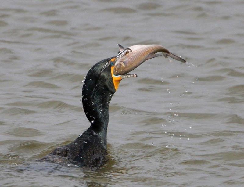 عندما تصطاد الطيور الاسماك #غرد_بصوره صوره 7