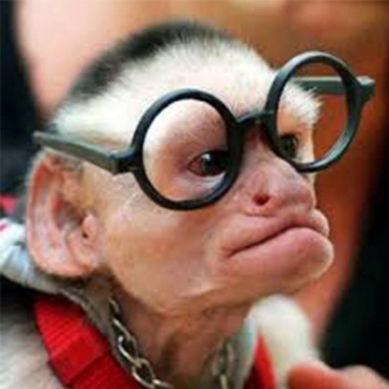 حيوانات ترتدى نظارة- #غرد_يصورة -5