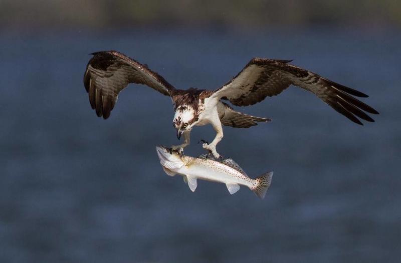 عندما تصطاد الطيور الاسماك #غرد_بصوره صوره 2