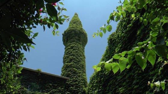 #الجامع_الأخضر مسجد تغطيه النباتات في #أضنة #تركيا صوره 4