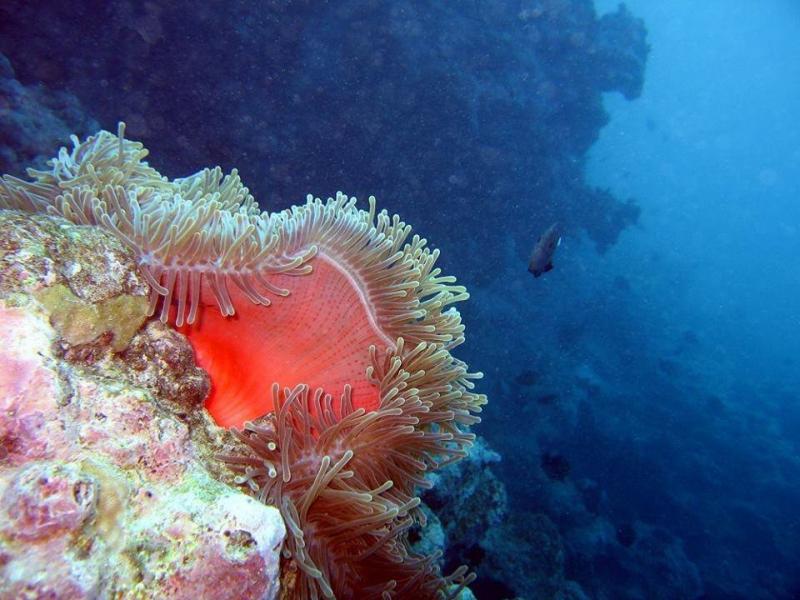 شاهد روعة الالوان تحت سطح الماء صوره 6