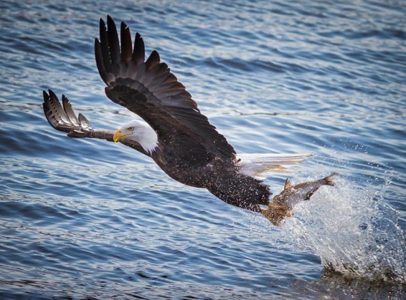عندما تصطاد الطيور الاسماك #غرد_بصوره صوره 10