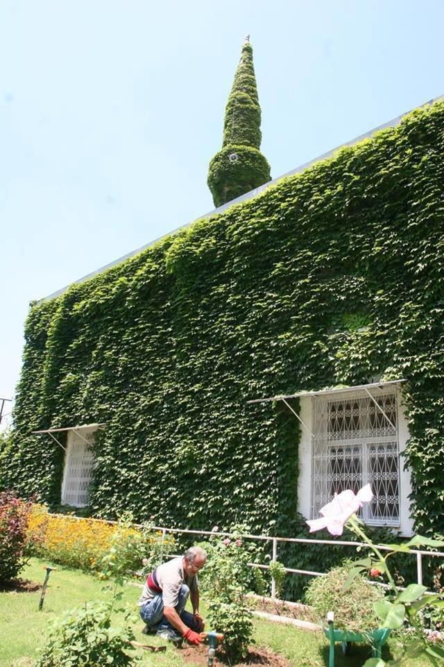 #الجامع_الأخضر مسجد تغطيه النباتات في #أضنة #تركيا صوره 6