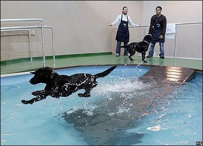 افتتاح فندق مجهز للحيوانات في #الكويت.. يشتمل على حمام سباحة وألعاب ترويحية