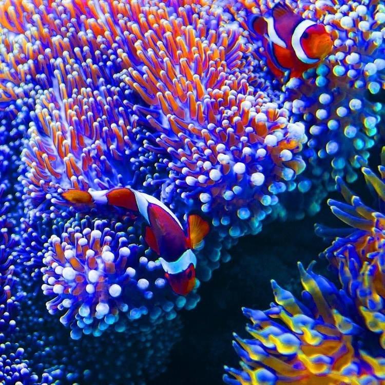 شاهد روعة الالوان تحت سطح الماء صوره 4