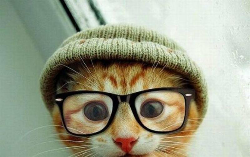 حيوانات ترتدى نظارة- #غرد_يصورة -8