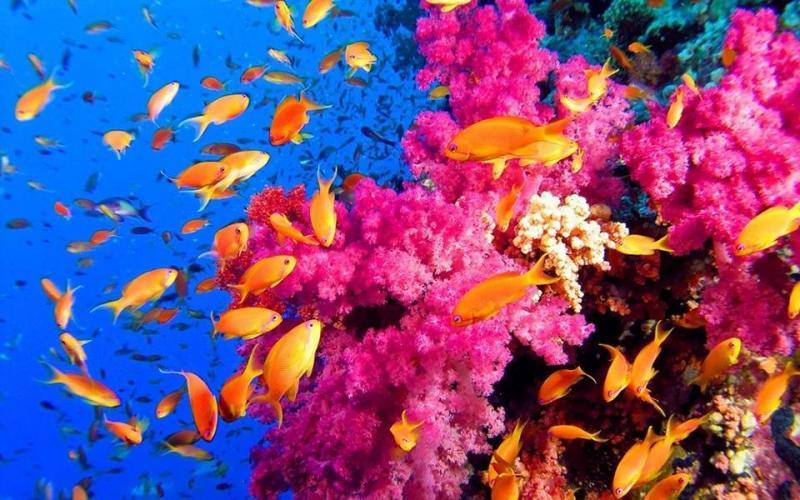 شاهد روعة الالوان تحت سطح الماء صوره 5