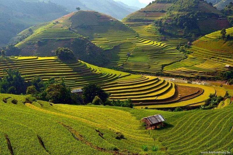 جمال وروعة حقول الأرز في #فيتنام صوره 4
