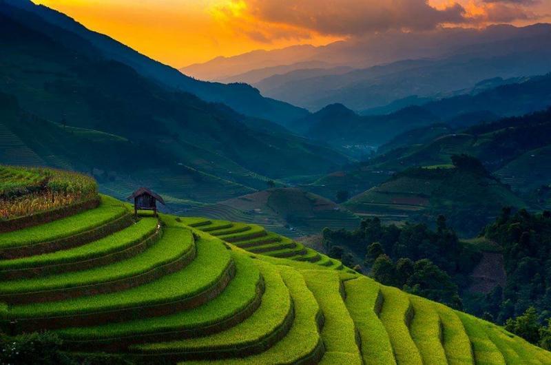جمال وروعة حقول الأرز في #فيتنام صوره 1