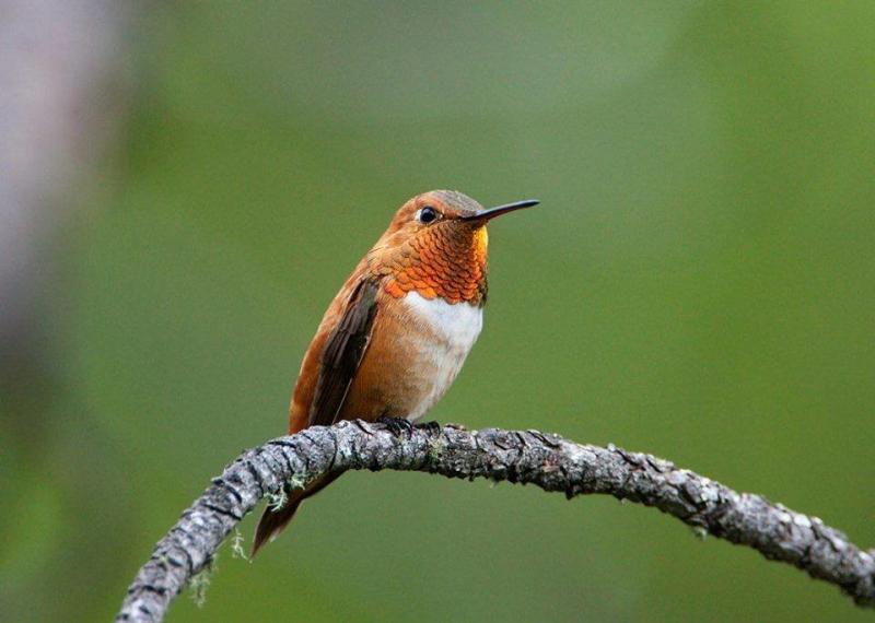 صور طائر #الطنان الذي يعد من اصغر الطيور #غرد_بصوره 3