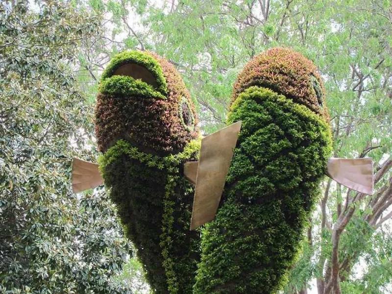 فن النحت في النباتات #غرد_بصورة -2