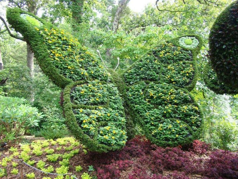 فن النحت في النباتات #غرد_بصورة -3