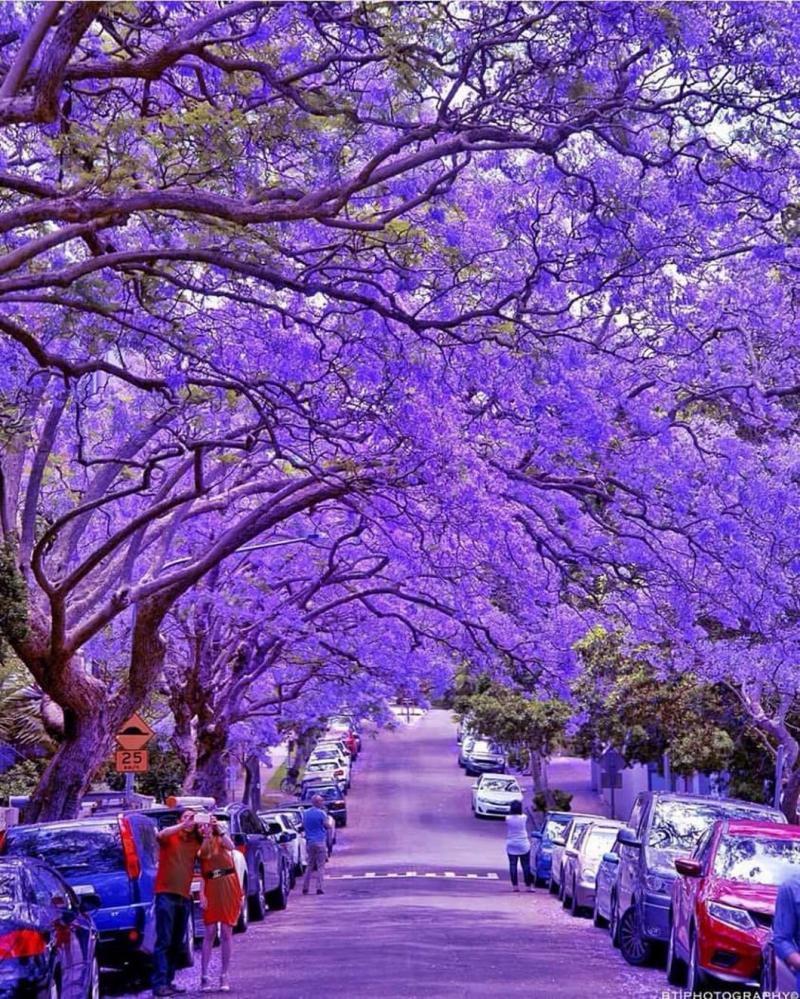 حديقة ميلسون في #سيدني #أستراليا