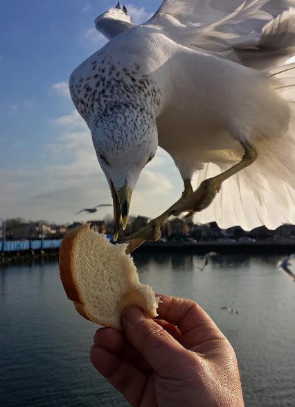 صورة بالوقت المناسب لطائر يلتقط خبزة