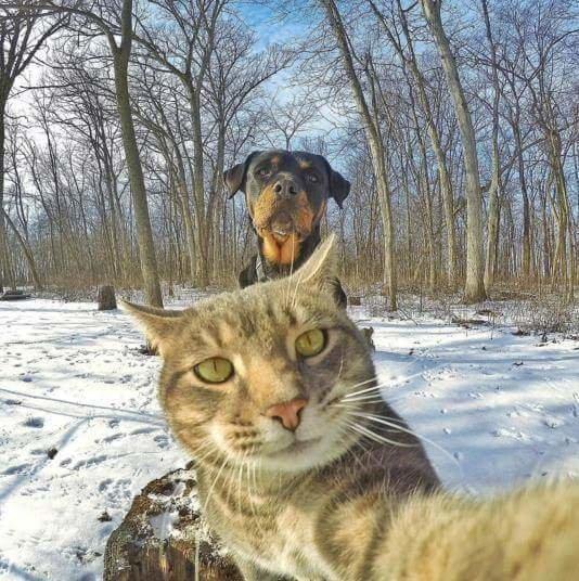 القطة الأشهر على وسائل التواصل الاجتماعي صورة 3