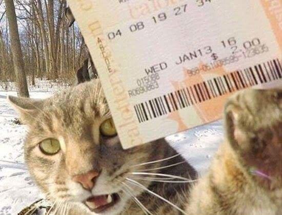 القطة الأشهر على وسائل التواصل الاجتماعي صورة 4