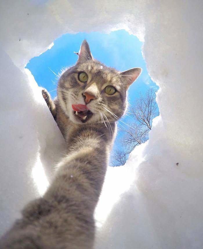 القطة الأشهر على وسائل التواصل الاجتماعي صورة 5