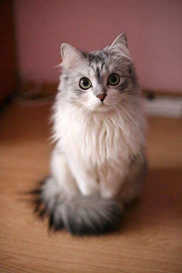 أجمل #القطط على #انستجرام - صورة ١٩