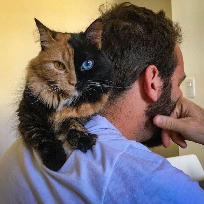 #قطة بألوان عينين وجسم غريبين - صورة ١