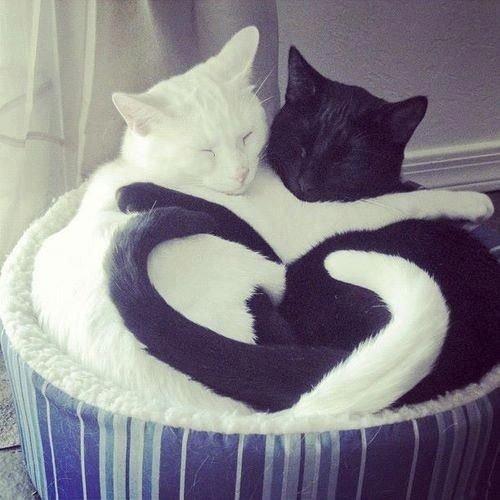 أجمل #القطط على #انستجرام - صورة ١٨